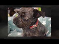 Mein Hund Partner auf 4 Pfoten Messe in Schweinfurt