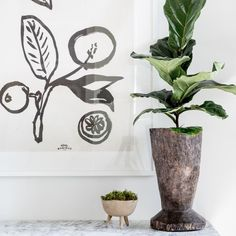 over on the design log, we're talking all things houseplant! how to care for plants, which plants to buy, what pots to use, etc - we're talking about it all! we love our little plant babes and hope you enjoy the things we're sharing about them! Little Plants, All Plants, Indoor Plants, Common Garden Plants, Garden Plants Vegetable, Best Plants For Home, Self Watering Pots, Staghorn Fern, Asparagus Fern
