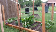 Raised bed for climbing veggies. Cucumbers, dill, yellow squash, and zucchini. Train the vines to grow up the fence by tying them with strips of cloth as they grow