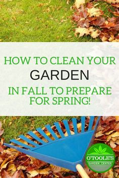 Do you want a beautiful lawn and garden come springtime? Learn some simple housekeeping tasks to do in your garden this fall in order to prepare for spring gardening. #Gardening #GardeningTips #SpringCleaning #FallGardening #OtoolesGardeningCenter