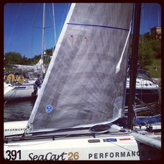 North Sails 3DL jib with tafetta cloth (shafe and uv protection) on one side.