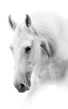 Find White Horse Isolated High Key stock images in HD and millions of other royalty-free stock photos, illustrations and vectors in the Shutterstock collection. Thousands of new, high-quality pictures added every day. All The Pretty Horses, Beautiful Horses, Animals Beautiful, Painted Horses, White Horse Painting, Canvas Picture Walls, Horse Posters, Horse Wall Art, Farm Art