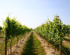 Washington Wineries