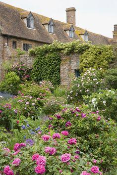 Gardens - Roses at Sissinghurst, Kent  http://www.nationaltrust.org.uk/sissinghurst-castle  Image copyright: National Trust Images/Jonathan Buckley