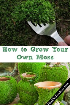How to grow your own moss Grow your own moss howtogrowmoss growyourownmoss gardening diygardening You are in the right place for country home decor When it nbsp hellip Diy Gardening, Container Gardening, Organic Gardening, Vegetable Gardening, Gardening Books, Flower Gardening, Gardening Apron, Gardening Scissors, Apartment Gardening