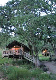 Safari West Outside Of Santa Rosa.. Cool Cabin Tents, Wine Tasting For Adults And Safari Tours, Oh My!