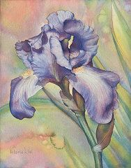 Iris Art Print featuring the painting Iris Dreaming by Victoria Lisi Watercolor Flowers, Watercolor Paintings, Watercolors, Floral Paintings, Picture Borders, Iris Art, Iris Painting, Watercolor Projects, Watercolor Tutorials