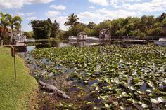 http://www.thegirlwiththesuitcase.com/2014/01/everglades-park-florida.html