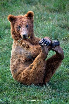 Bear Pilates