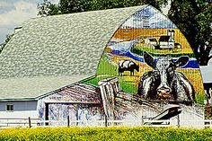 COW MURAL ON SIDE OF BARN, NEAR MONTON, MN