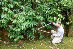 rhododendron-schnitt fl