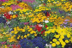 цветы полезные для огорода