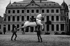 Horses at the Feria del Caballo and the Royal School of Equestrian Art ( Fundación Real Escuela Andaluza del Arte Ecuestre) , Jerez, Spain