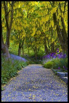 árvores chuva de ouro por MyohoDane