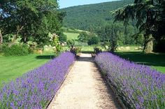 Ever since I stayed at a hotel in Italy with a lavender-lined driveway, I've wanted a lavender walk.  Someday I'll have a yard where something like this will work!