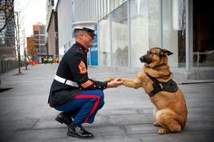 Meet Lucca, the K-9 Hero Who Risked Her Life to Save 14 Men!!  Parade Magazine's cover story this past weekend, an excerpt from the forthcoming book Top Dog, tells the story of Lucca, a German Shepherd-Belgian Malinois mix who led special forces soldiers onto a battlefield in Afghanistan's Helmand River Valley in March of 2012 and lost her left front leg in an IED explosion. http://parade.condenast.com/342211/parade/a-marines-best-friend/