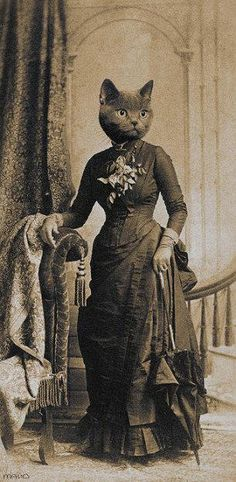 Victorian Cat Lady