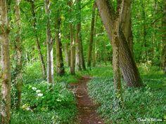 Left Bank Forest, Château Chenonceau. Loire Valley, France