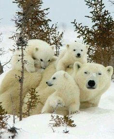 """""""Have Cubs"""" , they said. """"It'll be fun!"""" they said. """"YUH""""."""