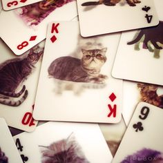 3D Cat Playing Cards - Puss in Suits £12.99