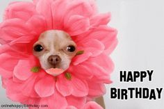 birthday chihuahua - Google Search