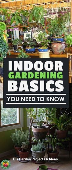 Vegetable Gardening For Beginners Just beginning to garden indoors? These indoor gardening basics will help you get started off right! Learn about plant lifecycles and how to grow them. Indoor Vegetable Gardening, Home Vegetable Garden, Hydroponic Gardening, Container Gardening, Organic Gardening, Indoor Hydroponics, Gardening Vegetables, Greenhouse Gardening, Vertical Hydroponics
