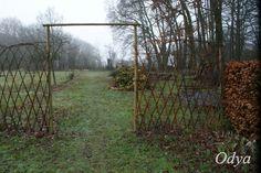 Plus De 1000 Id Es Propos De Osier Saule Salix Wicker Willow Weide Sur Pinterest