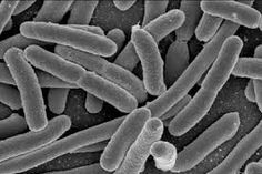 In the normal human gut, a lot of bacteria live in the large intestine (called intestinal flora, microbiota or gut microbiome). There are so many bacteria living in your intestine…View Post Infection Control, Urinary Tract Infection, Severe Bloating, Weak Immune System, Gut Microbiome, Gut Bacteria, Healthy Brain, Heart Disease, Parkinson's Disease