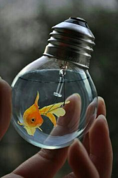 Gold fish in a light bulb. Small Fish Tanks, Cool Fish Tanks, Aquarium Original, Trucage Photo, Nanu Nana, Aquarium Fish Tank, Fish Art, Fish Fish, Pet Fish