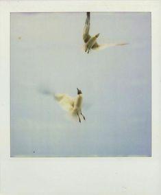polaroid by Mikael Kennedy. Polaroid Pictures, Polaroids, Polaroid Instax, Film Photography, Street Photography, Photo Colour, Retro, Cool Pictures, William Eggleston