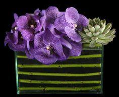 Vanda orchids/succulent/dogwood twigs