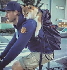 z- Dog (Shiba) Riding in Bicycler's Backpack