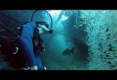 Diver Swims Through Amazing Tunnel Of Fish!