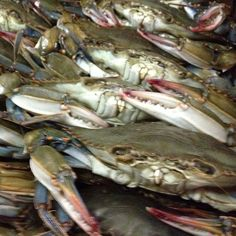 Soft Shell Crab.i love them crittrers