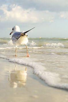 le sentiment de la mouette ⚓ photo by tina nord (seascape marine beach) Photo Animaliere, Photo D Art, Sea And Ocean, Ocean Beach, Beautiful Birds, Animals Beautiful, Beautiful Images, Beautiful Beach, Animals Tattoo