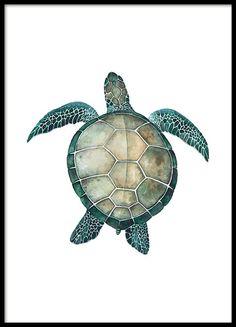 Sea turtle, poster in der Gruppe Poster bei Desenio AB (8424)