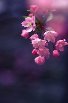 Untitled Frühling Wallpaper, Flower Background Wallpaper, Flower Phone Wallpaper, Flower Backgrounds, Spring Flowers Wallpaper, Flowers Nature, Exotic Flowers, Pretty Flowers, Pink Flowers