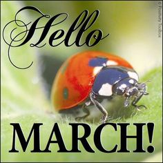 Backyard Fun: How to Build a Ladybug Habitat March Baby, Hello March, Bug Hotel, Garden Bugs, Weed Control, Slug Control, Facebook Profile Picture, Beautiful Bugs, First Day Of Spring