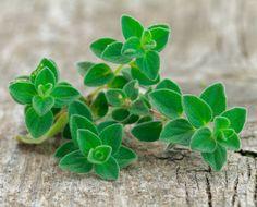 5 Ways to Use Fresh Oregano From Your Garden