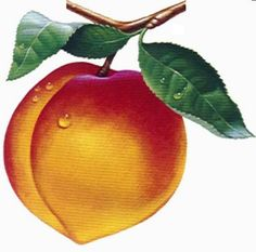 how to draw a peach   references drawing now how to draw a bowl of fruit