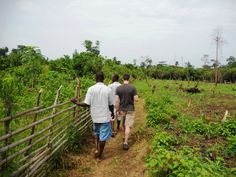Giant African Snail Farming! http://www.indiegogo.com/projects/african-snail-farming-project