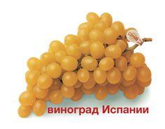 Виноград из Испании.Виноград мешки Виналопо долина является лучшим когда-либо!