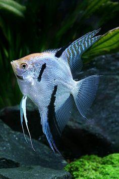 Tropical Fish Store, Tropical Fish Aquarium, Tropical Freshwater Fish, Freshwater Aquarium Fish, Betta Aquarium, Betta Fish, Aquariums, Oscar Fish, Beautiful Sea Creatures