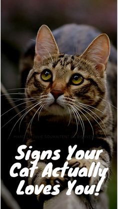 6 Signs Your Cat Actually Loves You! Cute Cats, Funny Cats, Cat Diseases, Cat Whisperer, F2 Savannah Cat, All About Cats, Cat Facts, Funny Cat Videos, Cat Health