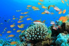 ocan-marine-ecosystem-coral-reef