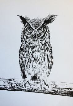 Owl (ink on paper, 42x29,5 cm)