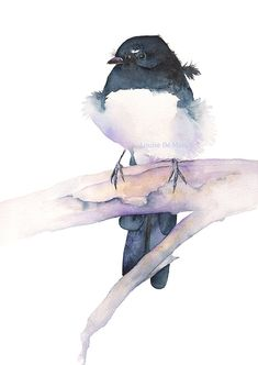 Willie Wagtail print of watercolor painting 5 by 7 by LouiseDeMasi