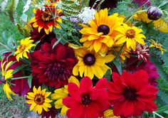Rich reds and vibrant golds of Autumn flowers grown at Orchard Oast Flowers. Dahlias, Rudbeckias, Zinnias and greenery foraged from the garden.