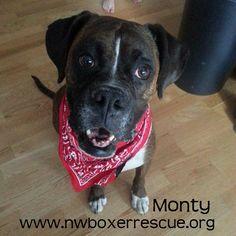 Mr. Monty has found his furever home! Congrats Monty!