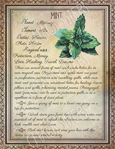 Printable Herbs Book of Shadows Pages Set 2 Herbs & Plants Correspondence Grimoire Pages Witchcraft Wicca Printable BOS Wicca Herbs, Witchcraft Herbs, Witchcraft Spell Books, Wiccan Spell Book, Green Witchcraft, Magick Spells, Candle Spells, Magic Herbs, Herbal Magic